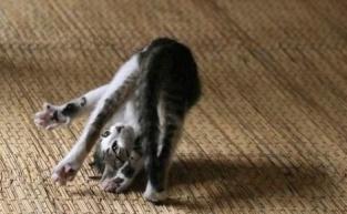 Funny-Yoga-Cats-4