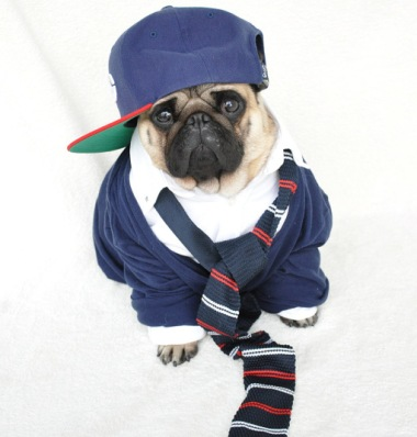 HERISAU, SWITZERLAND - UNKOWN: Nutello wears a 'smart casual' outfit with a shirt and baseball hat, in 2015, Herisau, Switzerland. AN ADORABLY grumpy pug with fashion sense fit to grace the pages of Vogue has become an instant internet sensation. Nutello, the one and a half year old fawn pug, entertains his 14,000 followers on Instagram with his fashion-forward outfits ñ complete with a model-worthy frown. Each post racks up more than 1,000 likes on his account