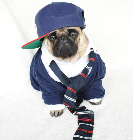 Fashion Lessons From The Best Dressed Dogs ofInstagram