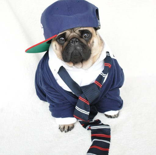 Fashion Lessons From The Best Dressed Dogs of Instagram