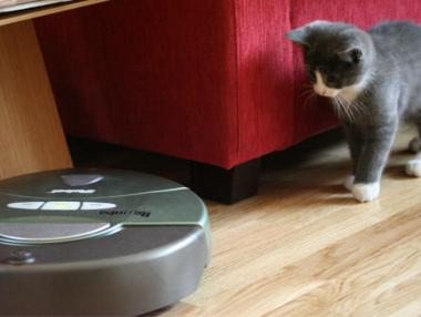 Cat Chasing Robot Vacuum Image Credit Eirik Newth